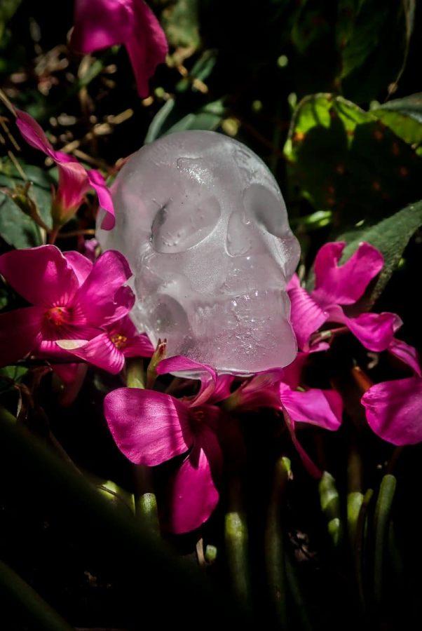 Ice skull on flowers