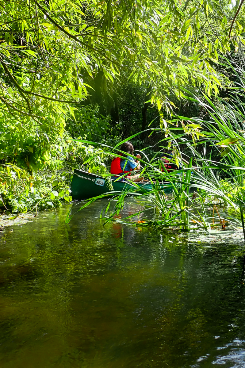 Canadian canoe on a river surrounded by green foliage