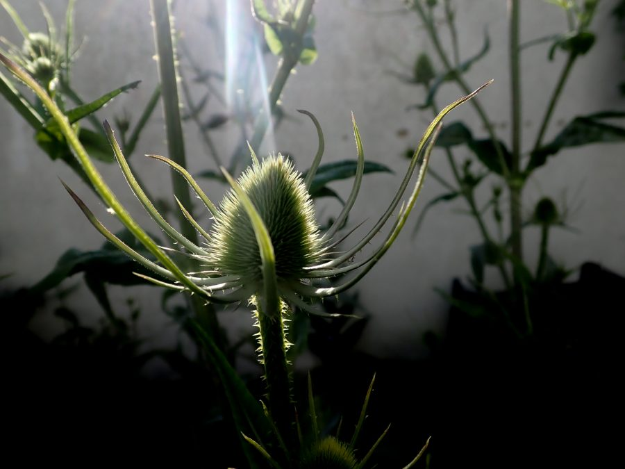 Light on plant