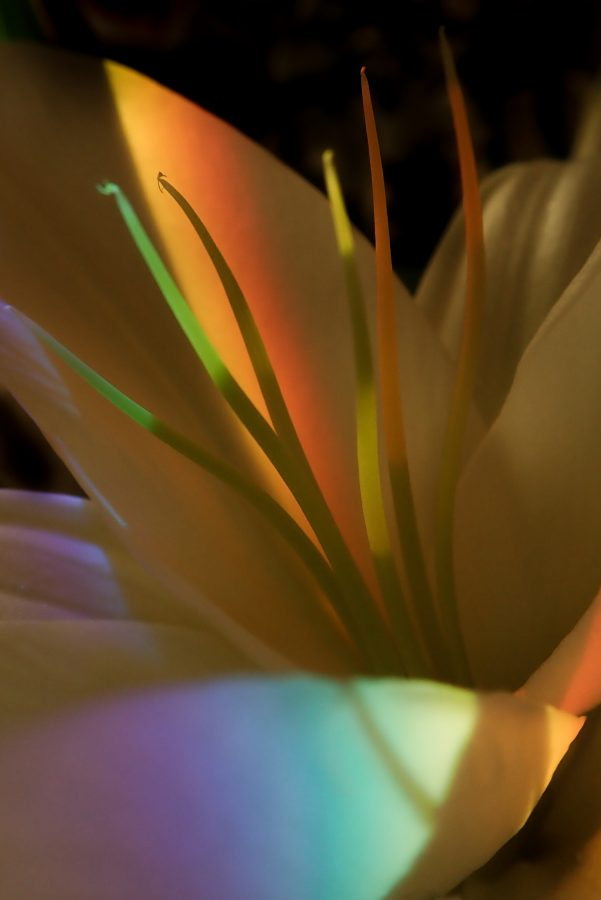 Dispersive prism and a flower