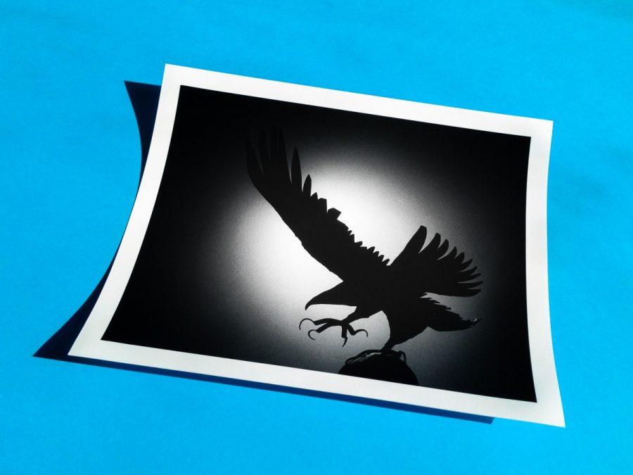 A print of a bird